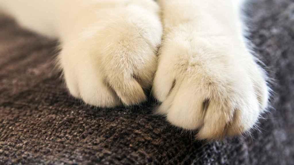Protege tus muebles con los rascadores para gatos más vendidos de Amazon
