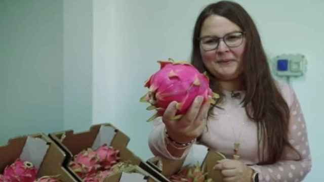 Isora vende a cinco euros el kilo la pitaya a Mercadona.