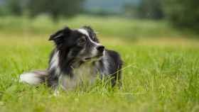 El test para saber si tu perro es superdotado
