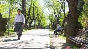 Valladolid-primavera-reportaje-atipica-flores-9