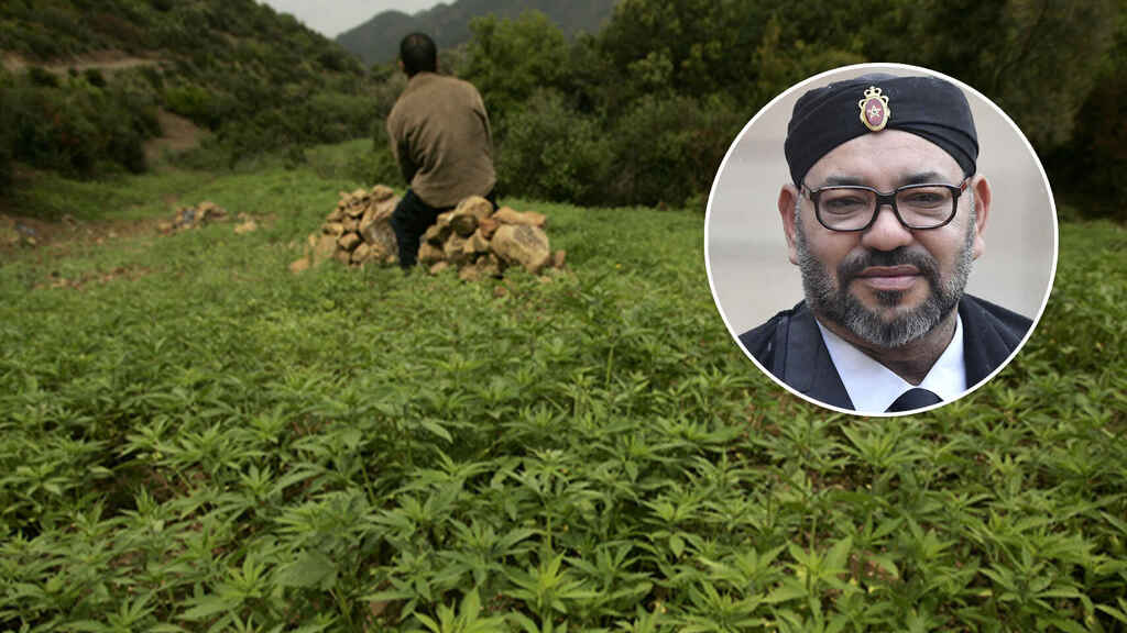 Una plantación de cannabis y Mohamed VI, en un fotomontaje.