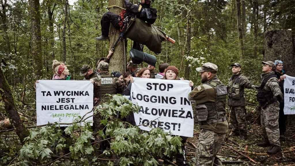 Activistas de Greenpeace protestan contra la tala de árboles en el bosque de Bialowieza.