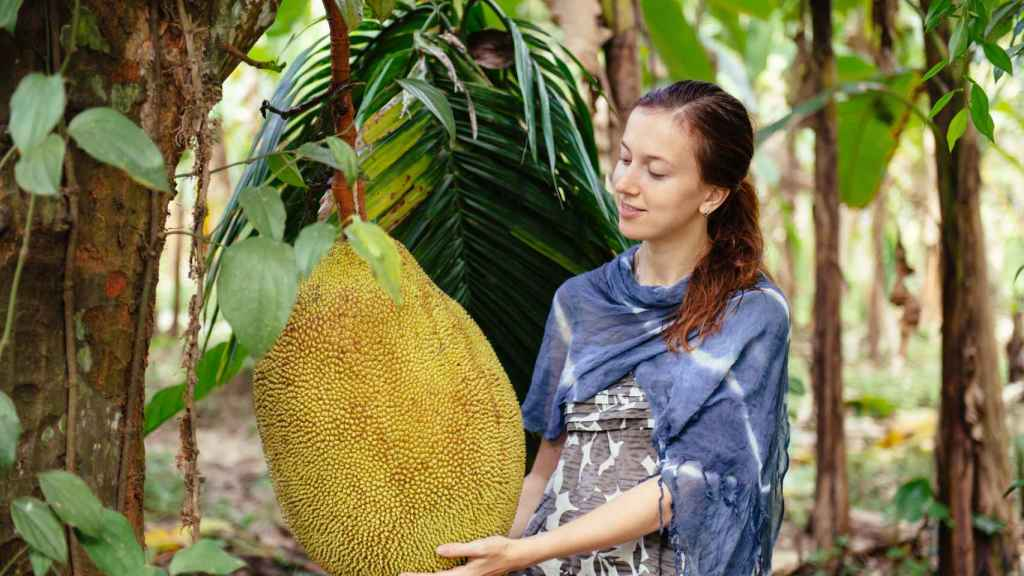 Una mujer junto a un ejemplar de jackfruit muy grande.