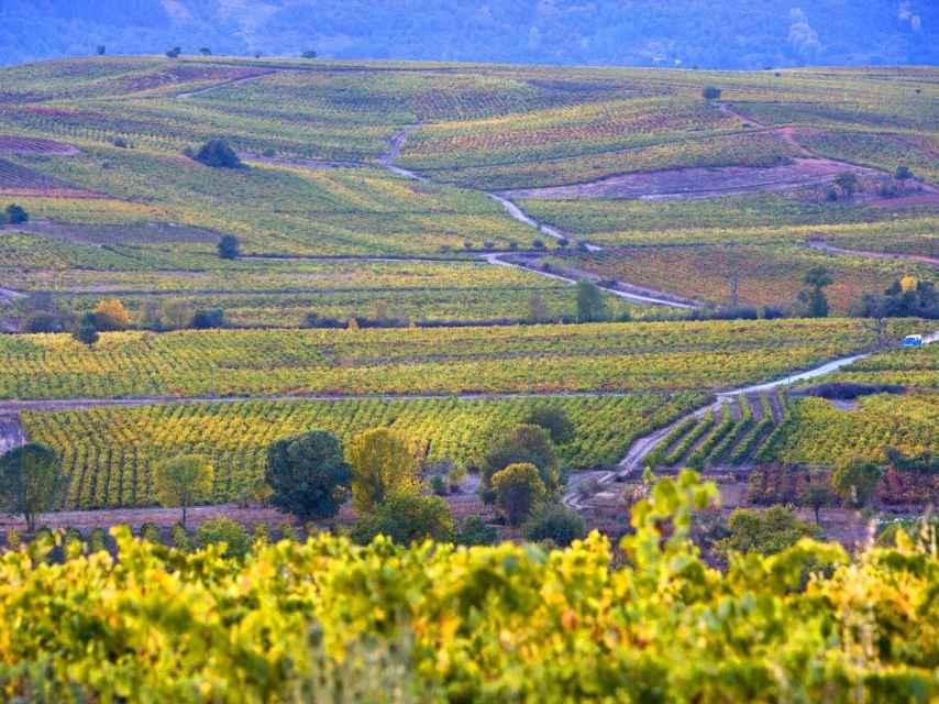 Uno de los numerosos paisajes de viñedo de nuestra geografía.