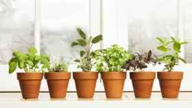 Por qué mis plantas de interior no crecen