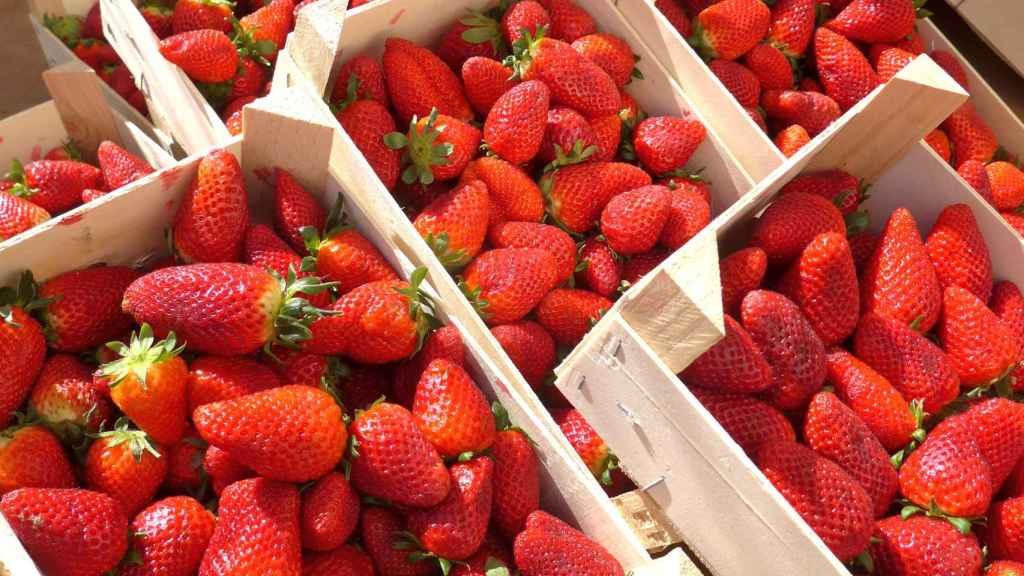 Cajas de fresas para vender.