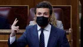 Pablo Casado, presidente del PP, en el Congreso de los Diputados este miércoles.