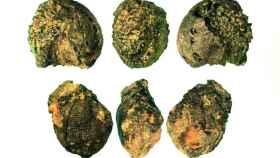 Restos carbonizados de mijo, un grano de cereal, encontrados en los Alpes orientales