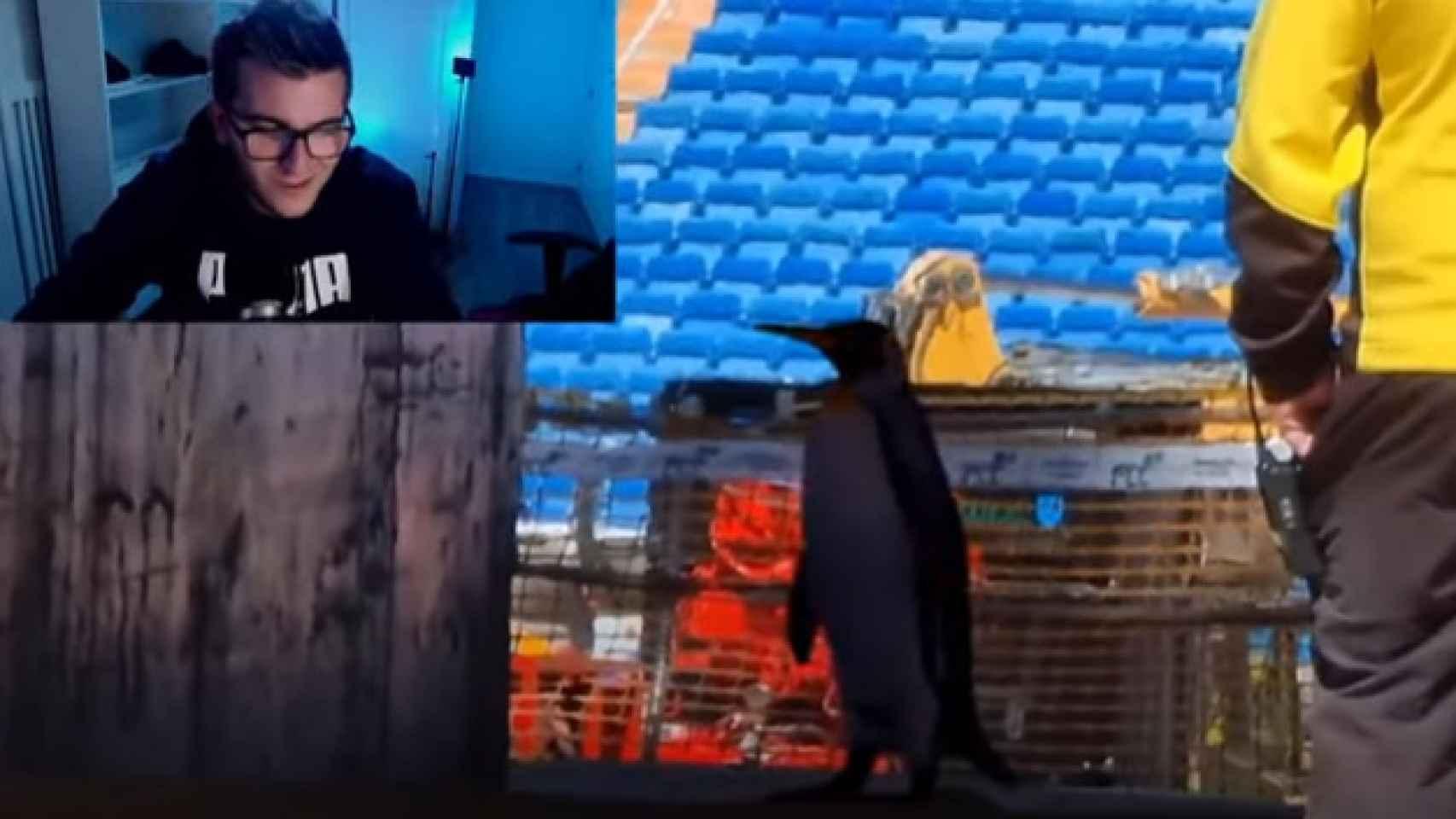 Los pingüinos en las obras del Santiago Bernabéu: el troleo de Javier Caireta del que todo el mundo habla