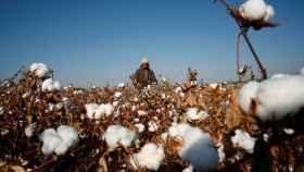 Una mujer de la etnia uigur recoge algodón en la provincia de Xinjiang.