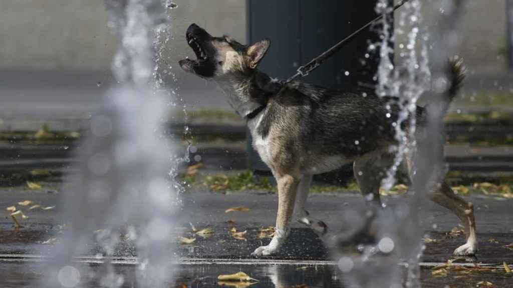 Un perro ladra entre dos chorros de agua.