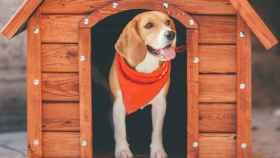 Encuentra la mejor caseta para perros según su tamaño