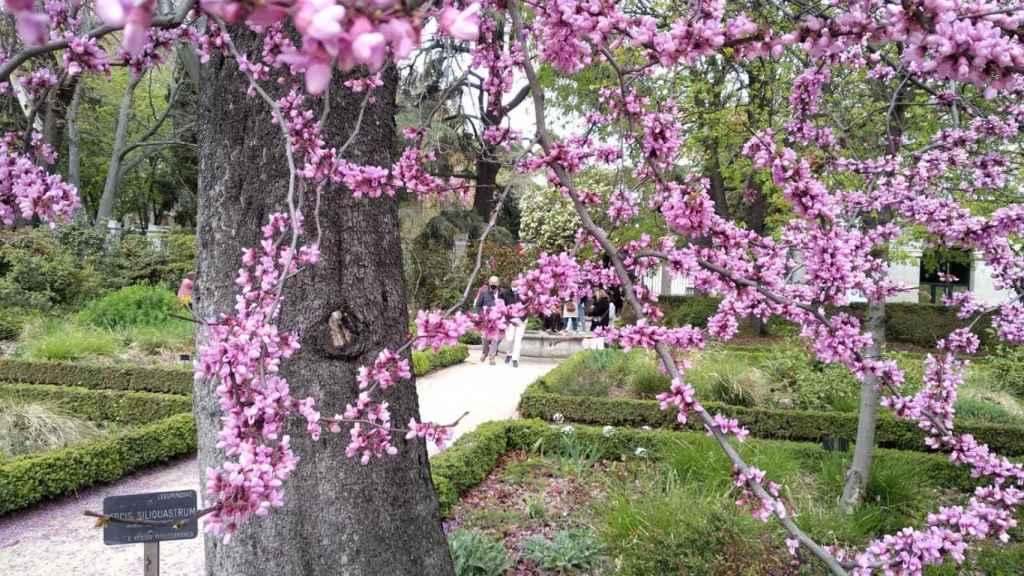 El Jardín Botánico.