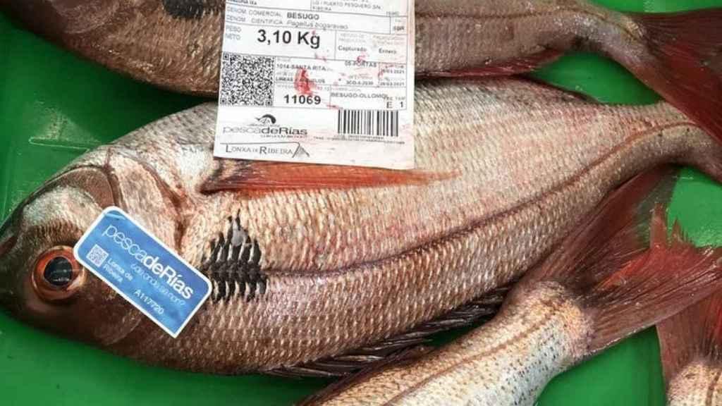 Besugos certificados con etiquetas pescadeRias (flota artesanal) en una subasta en la lonja de Ribeira (A Coruña).