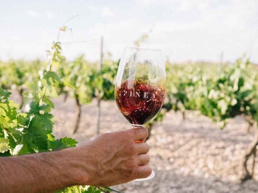 Una copa de vino en el viñedo.