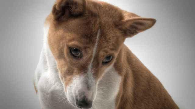 Listado de todas las razas de perros que existen