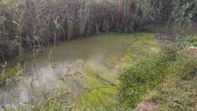 Muestras de contaminación en el parque natural de l'Albufera de Valencia.