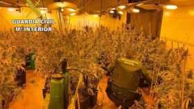 El detenido y supuesto 'fallecido' desde 2004, cultivaba marihuana.