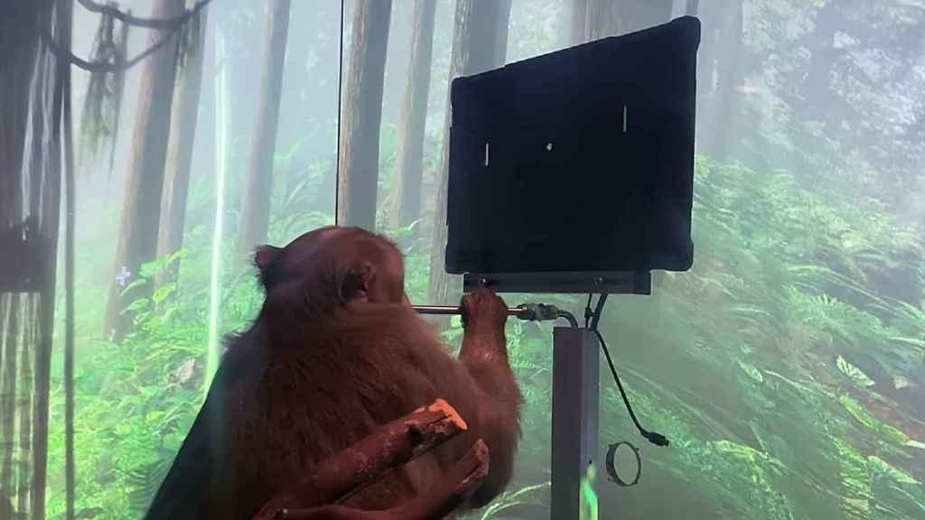 Un mono jugando al Pong con la mente.
