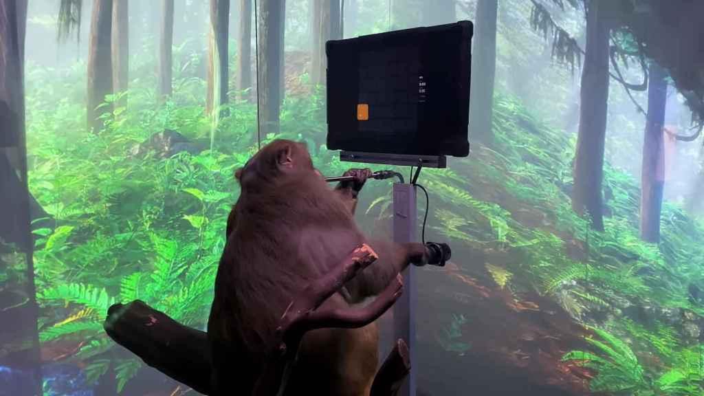 El mono está haciendo tareas con su mente.