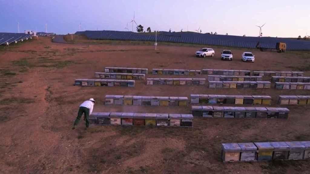 Las colmenas instaladas en la planta fotovoltaica de Iberdrola en Huelva.