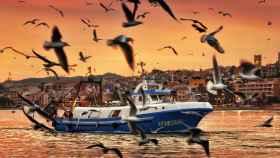 Gaviotas frente a un barco pesquero en Villajoyosa