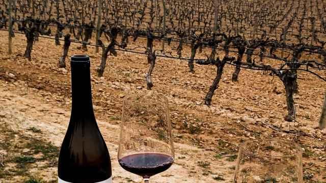 San Cobate, el vino tinto que ha puesto en jaque a Ribera del Duero