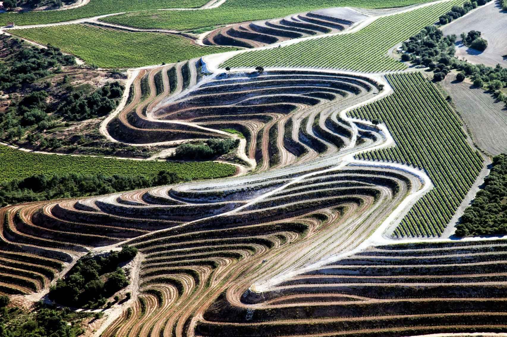 Vista aérea del viñedo en bancales de la finca San Cobate.