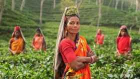 Una mujer en una plantación de té.
