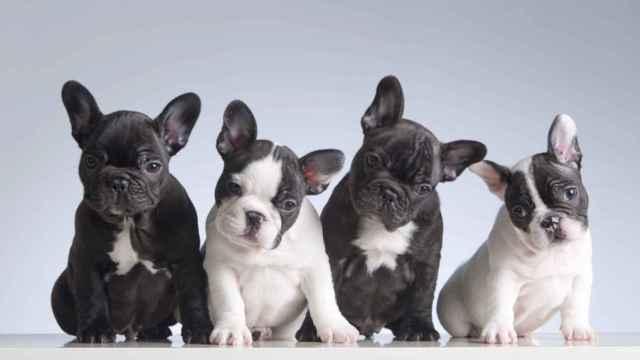 ¿Cuánto suelen vivir los perros según la raza?