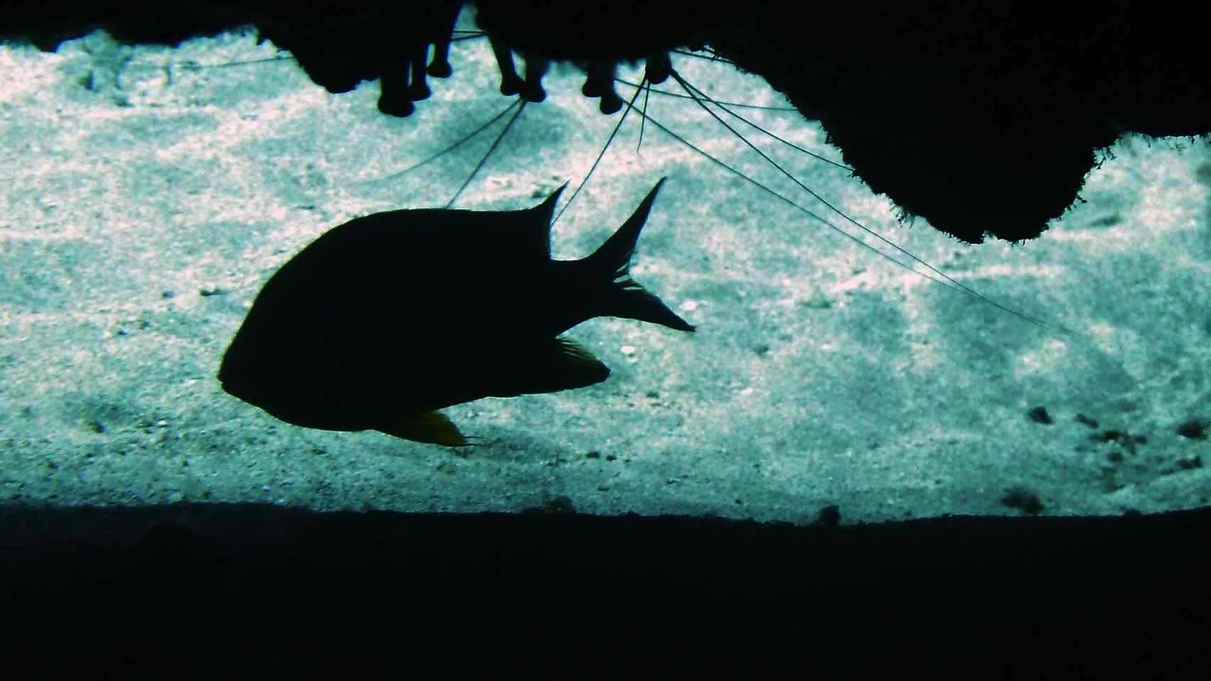 La Cueva de los peces de Alicante, un peligroso paraíso subterráneo