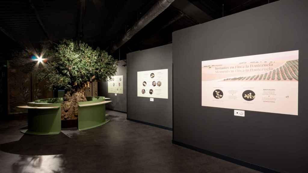 El interior del centro de interpretación del olivar perteneciente a Finca La Pontezuela.