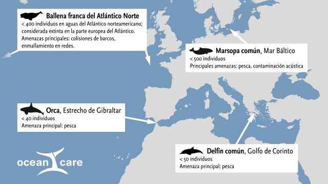Cetaceos en peligro de extinción en Europa.