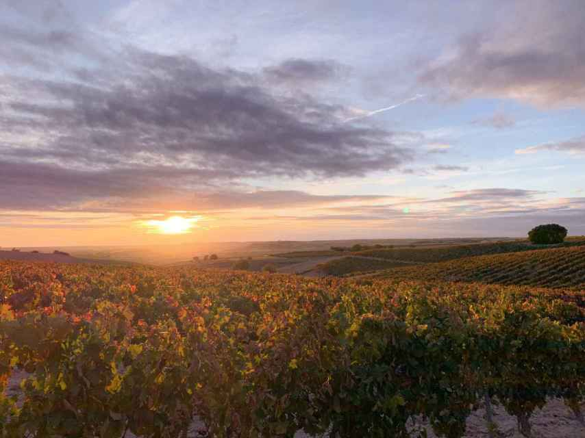 Atardecer sobre viñedos de Ribera del Duero.