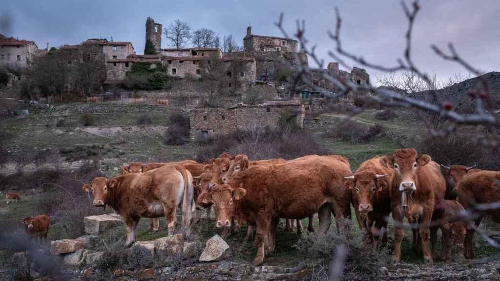 San Vicente de Munilla, La Rioja, España.