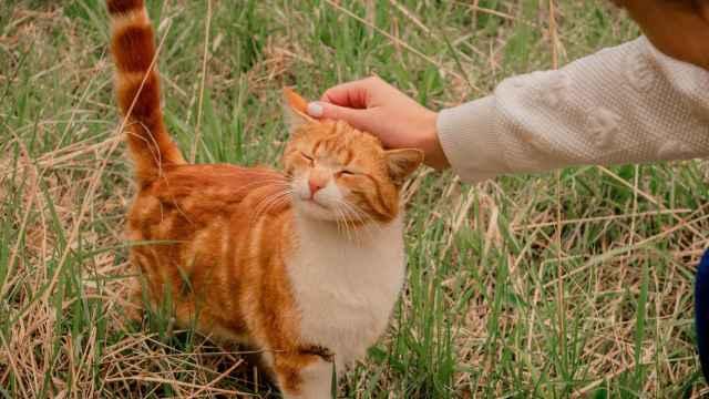 5 cosas que los gatos odian de los humanos