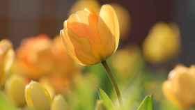 Cómo y cuándo regar las plantas en primavera