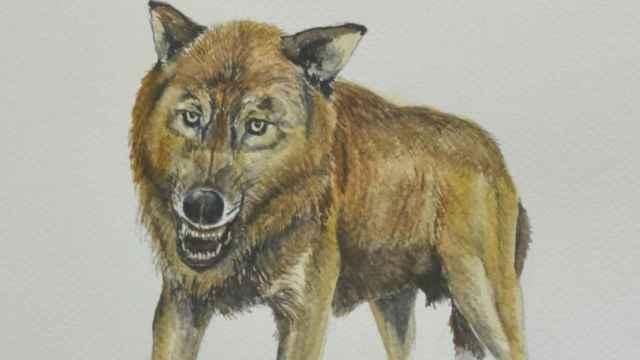 Reconstrucción del 'Canis orcensis', por Antonio Monclova