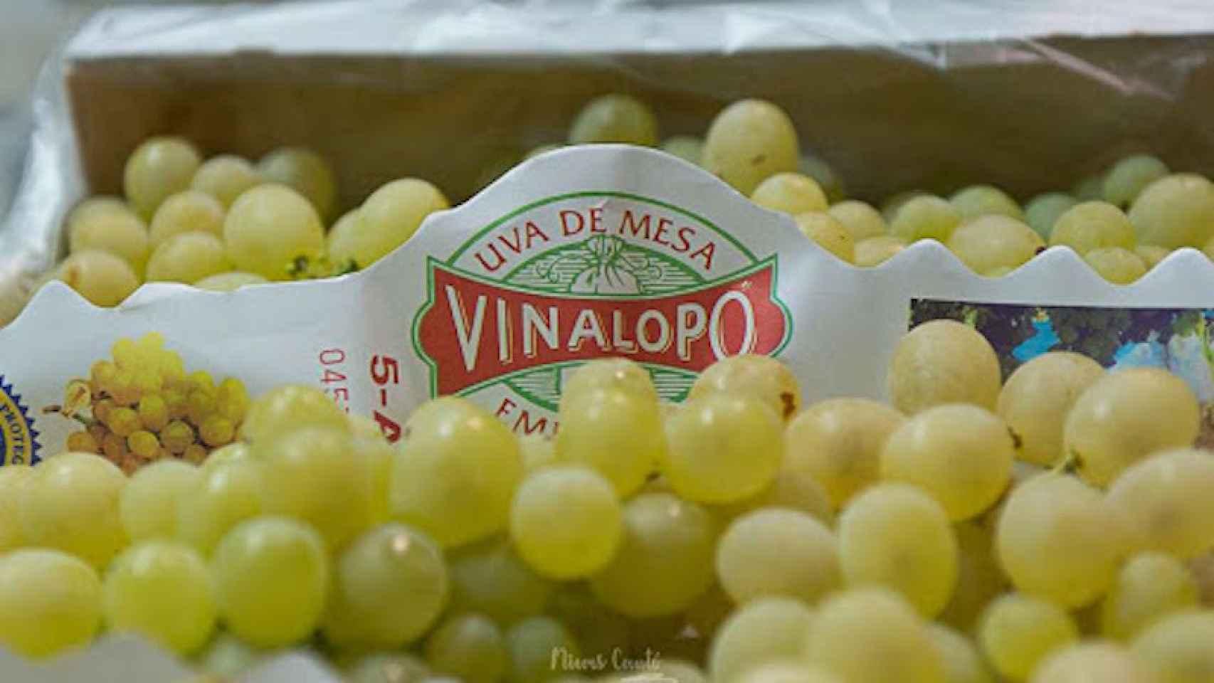 Uva de la comarca del Vinalopó