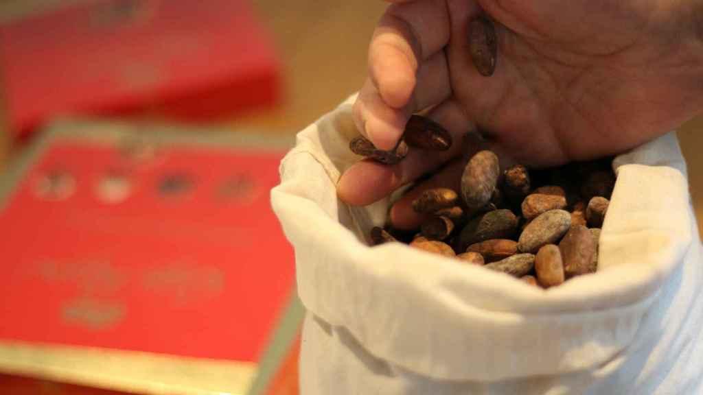 Nestlé utilizará cascarilla de cacao como biocombustible para generar energía verde