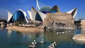 Los acuarios más espectaculares para visitar en España