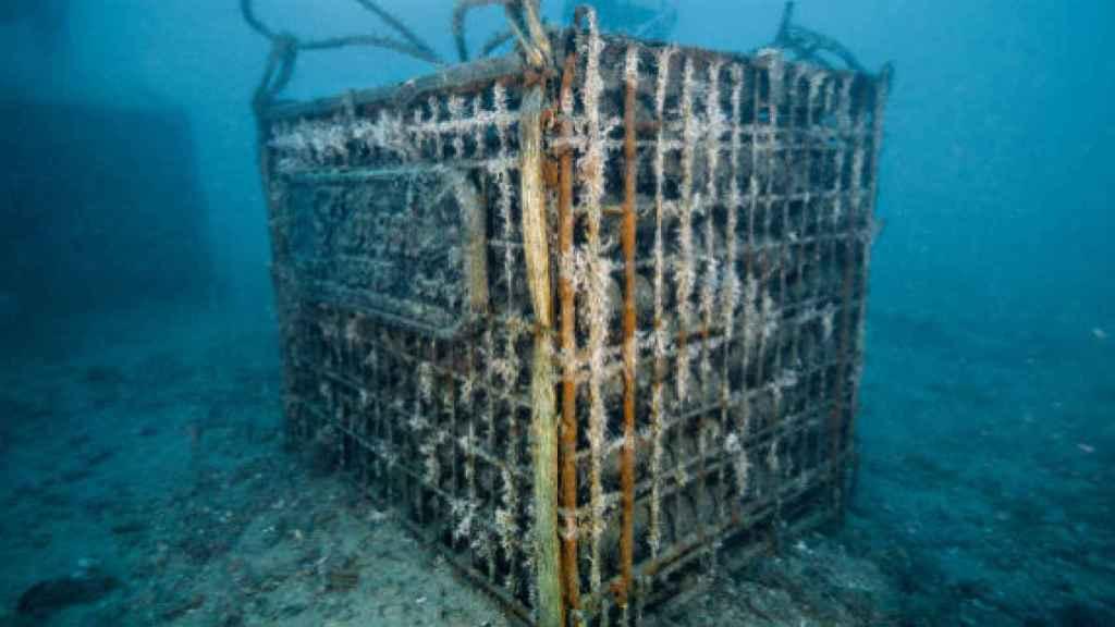 Jaula para el envejecimiento de vinos bajo el mar.