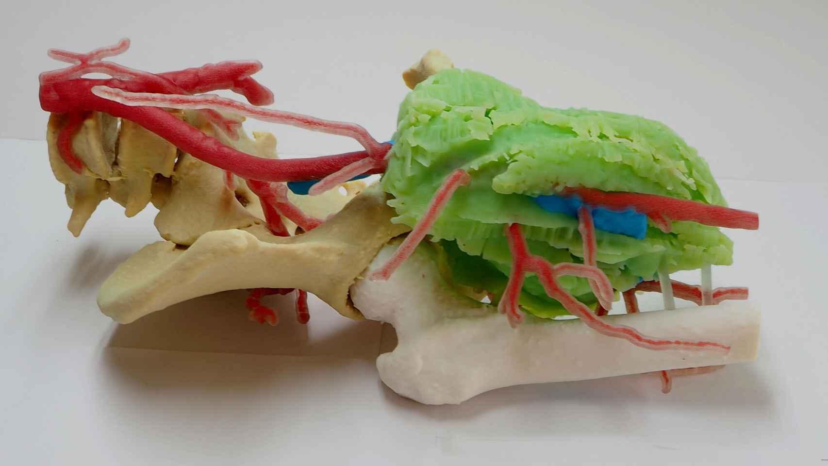 El biomodelo anatómico impreso en 3D por el instituto AIJU y la pyme Avamed Synergy.
