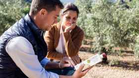 El mejor aceite de oliva virgen extra de España es de Granada y casi desconocido: su precio, desde 6 euros