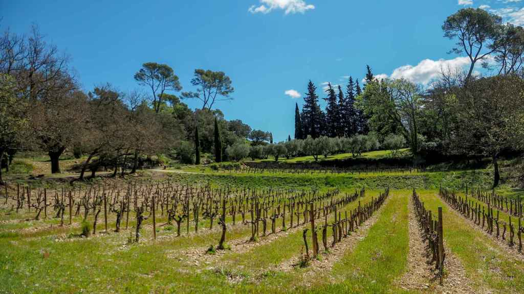 The farm has vineyards and olive groves.