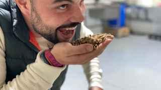 La granja de grillos para comer de tres millenials en Albacete: saben a nueces
