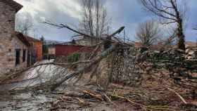 Unos árboles caídos en Cantalojas (Guadalajara)