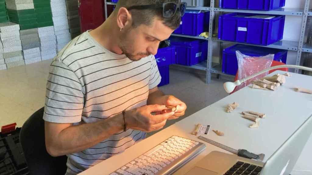 El arqueólogo Marcos García, estudiando restos de animales.