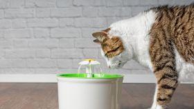 Fuentes de agua automáticas para mascotas que las mantendrán siempre hidratadas