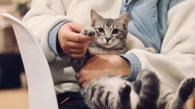 El dueño de una mascota con su gato.